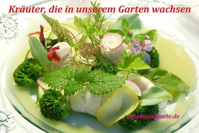 Kräuter640x427